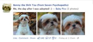 Bonny the Shih Tzu facebook