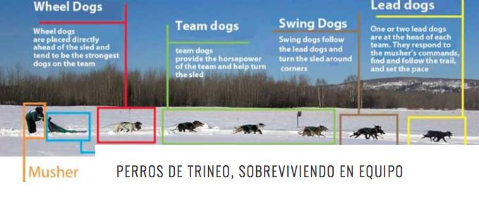 PERROS TRINEO SOBREV HEADER
