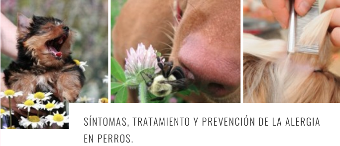 alergic dogs ESP 1 header.png
